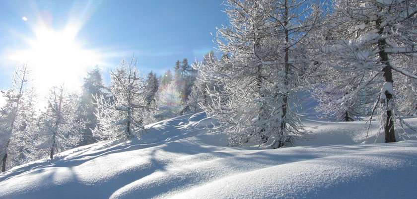 Switzerland_Verbier_sunshine-trees-deep-snow.jpg